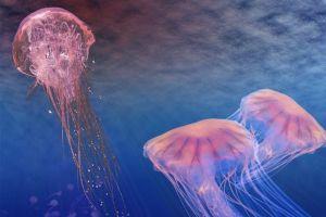 奇闻异事:科学家发现迄今为止的最长生物?可达到蓝鲸体长的四倍