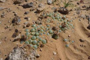 """为什么去非洲旅游时,不要捡地上的""""玉石""""?答案让人意想不到"""