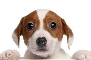 之前怎么没发现?养了狗狗之后生活变得不一样了呢~不准你找我!