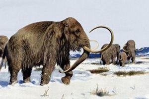 灭绝了的动物为何会再现?地球怎么了!