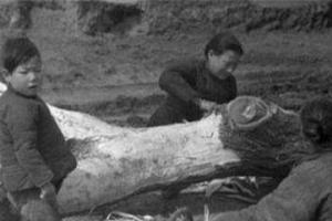 古代闹饥荒,灾民为何宁可啃树皮,也不愿上山打猎,下河捉鱼呢?
